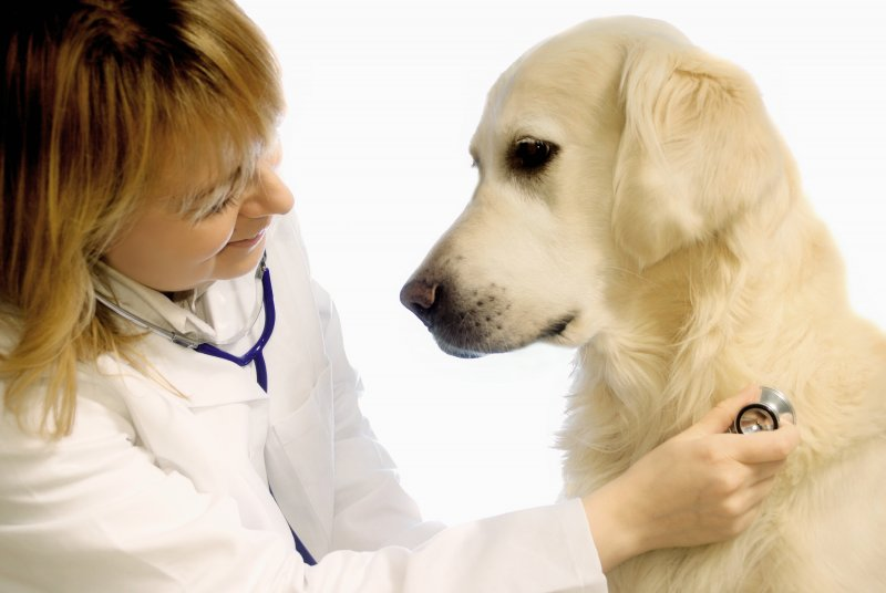 Veterinary medicinal products with antiparasitic action